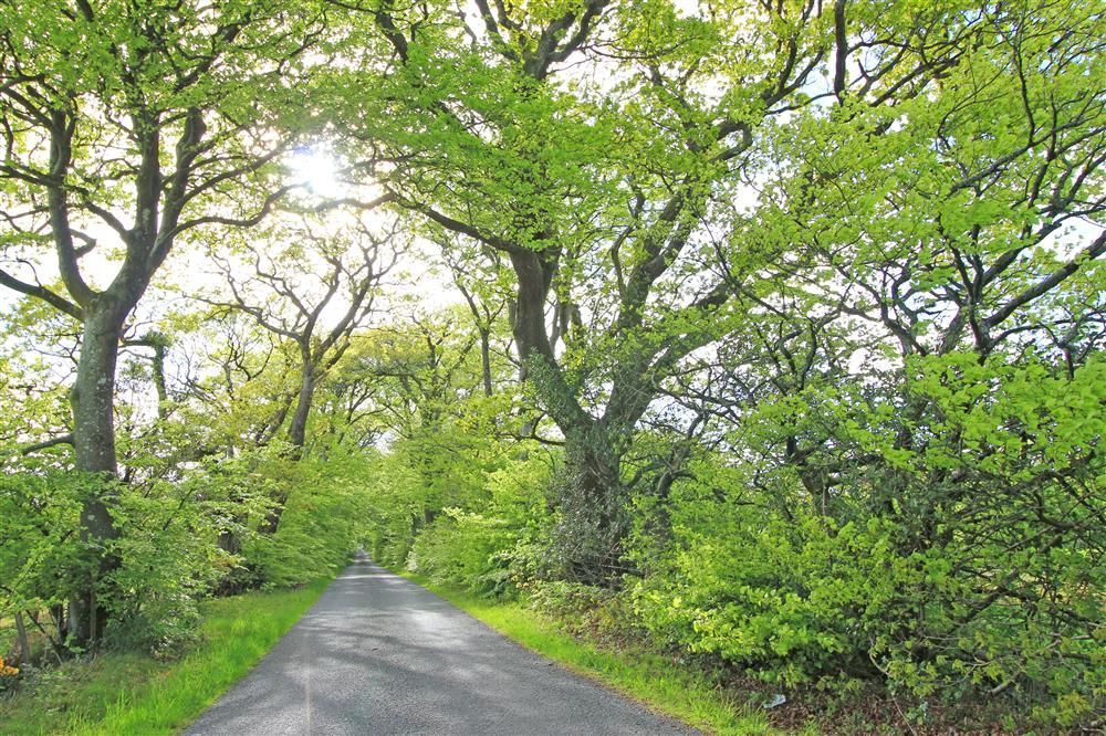 The Tree House is deep in the countryside of the Llyn Peninsula, this is a section of country lane before you reach The Tree House.