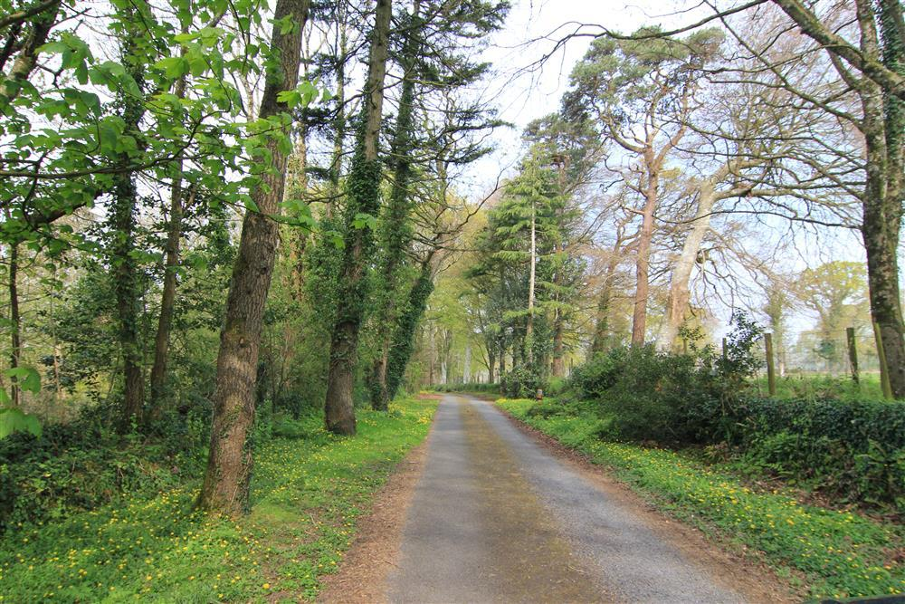 The long drive through the tree towards Ty Newydd - the National Writing Centre of Wales. You pass the grand house of Ty Newydd and the other holiday cottages. Min y Mor is the last cottage on this drive with views of the sea.