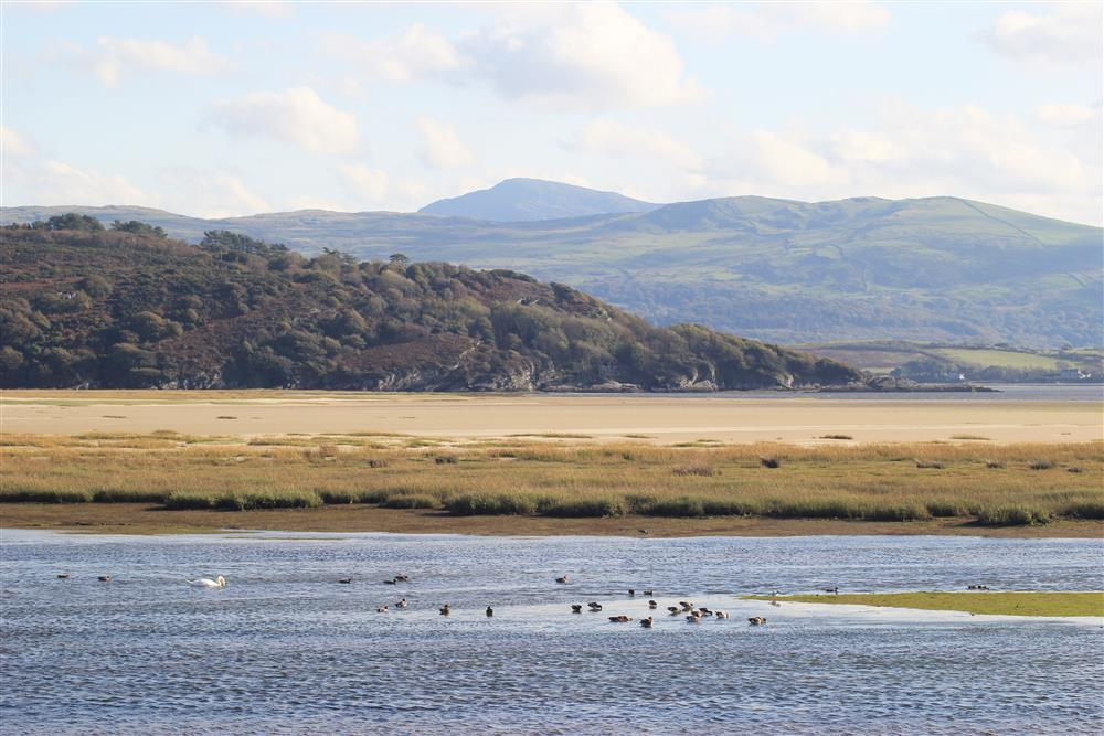 Close up photo of the views and seabirds on the estuary.