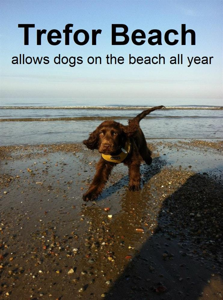 Terfor Beach is Dog Freindly all year round.